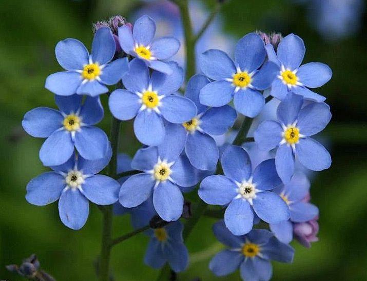 Modrá nezábudka: Svetový deň duševného zdravia